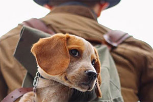 Tamarack Lodge - dog friendly lodging