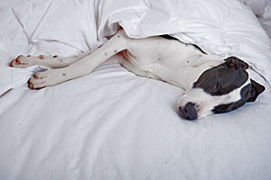 Hotel Ketchum | Dogs love our beds